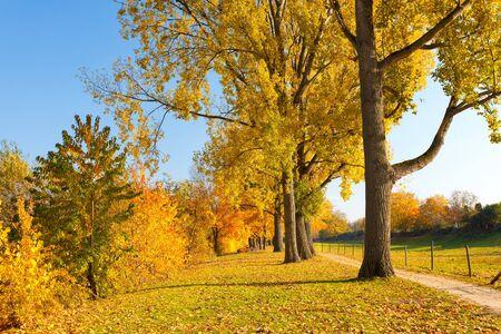 Colorful autumn Stock Photo - 10059341