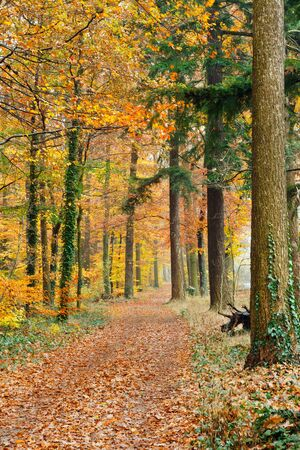 Pathway in the autumn forest Stock Photo - 10059371