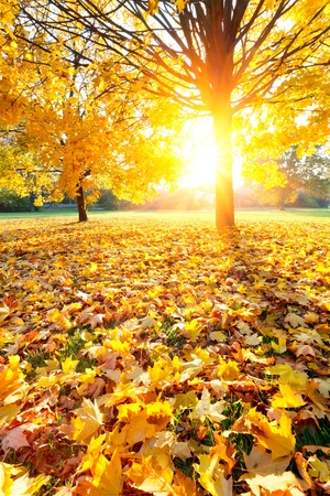 Colorful autumn Stock Photo - 10059369