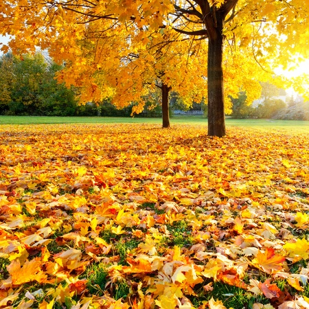Colorful autumn photo