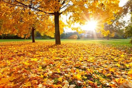 Colorful autumn Stock Photo - 10505744