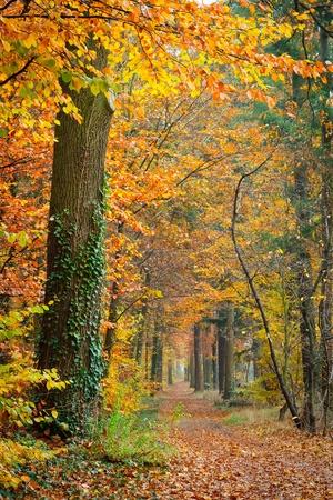 Colorful autumn Stock Photo - 10563330