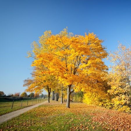 Colorful autumn Stock Photo - 10563255
