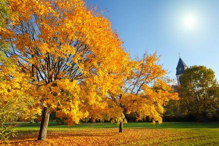 Colorful autumn Stock Photo - 10563259
