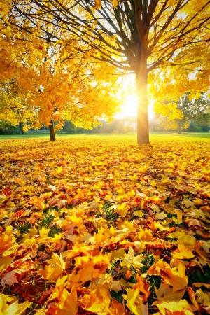 feuillage: Feuillage d'automne ensoleillé