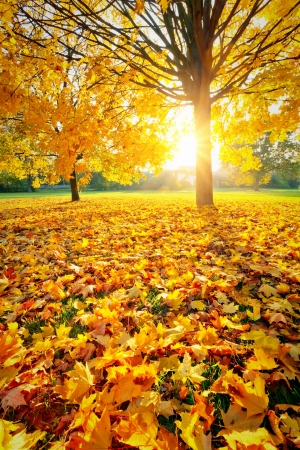 fall foliage: Sunny autumn foliage