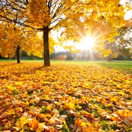 naturaleza: Follaje de oto�o soleado Foto de archivo