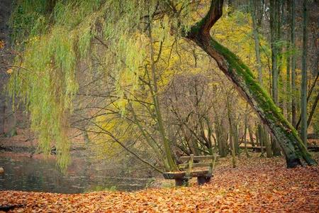 sauce: Estanque en el Parque de oto�o Foto de archivo