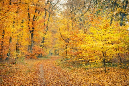 Pathway in the autumn forest, Germany Stock Photo - 10606738