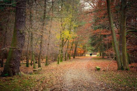 Autumn in the forest photo