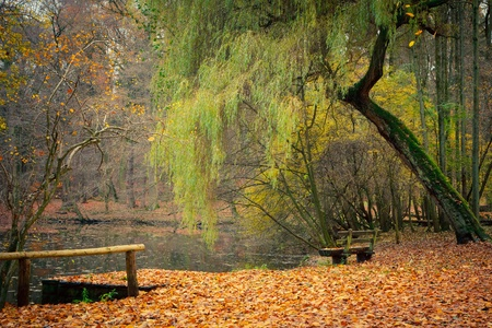 moody background: Pond in the autumn park