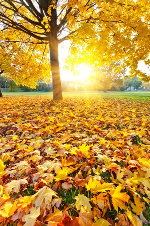 Sunny autumn foliage photo