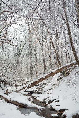 Rock Creek park at winter photo