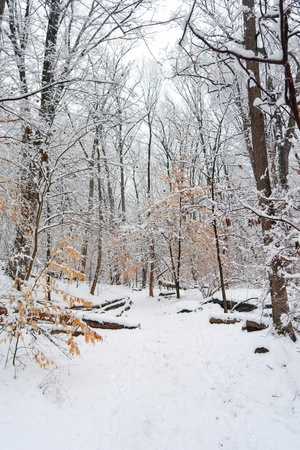 Winter park, Washington DC photo