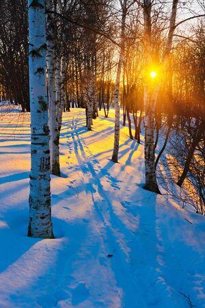 boldino: Sunset in winter park