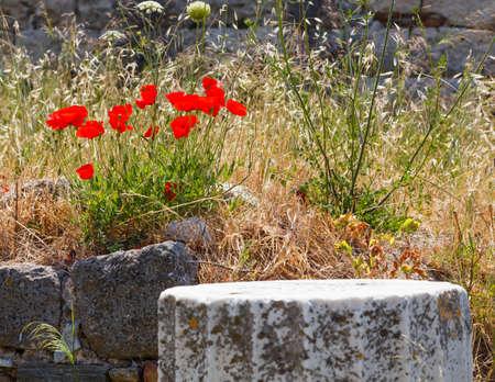 edad de piedra: Ruinas en Kos, Grecia