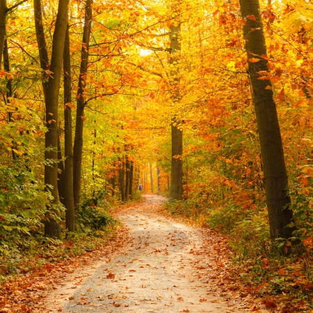 autumn road: Pathway in the autumn forest