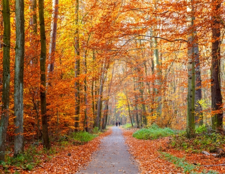 Sentiero nel bosco in autunno