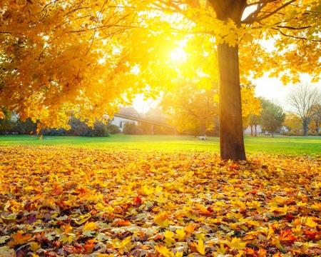 natural light: Follaje de oto�o soleado Foto de archivo