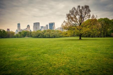 Central park at rainy day, New York photo