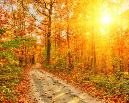 Chemin dans la forêt d'automne