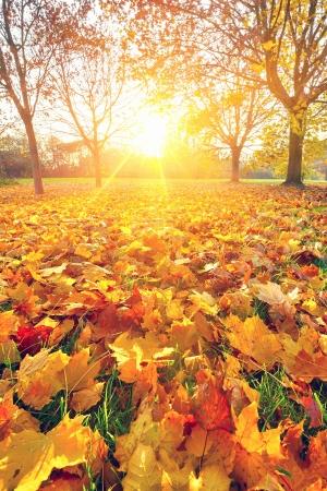 Zonnige herfst gebladerte Stockfoto - 14895733