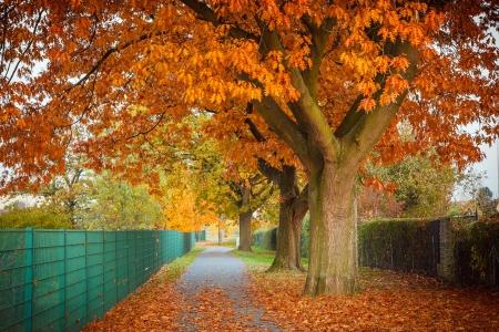 Red autumn oak tree photo