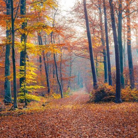 myst: Foggy autumn forest Stock Photo