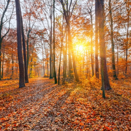 myst: Sunset in the autumn forest Stock Photo