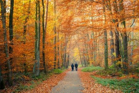 parejas caminando: Camino en el bosque de otoño Foto de archivo