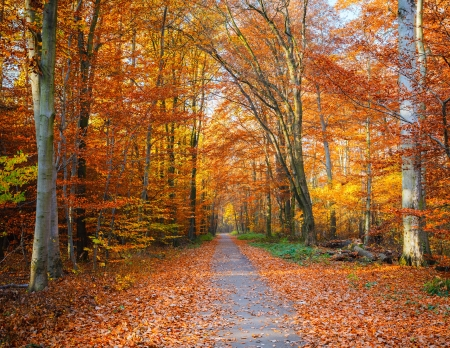 forest road: Pathway through the autumn forest