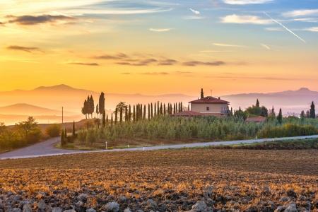 cypress: Tuscany landscape at sunrise, Italy