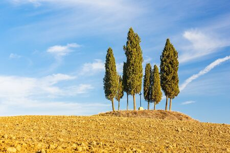 Tuscany landscape with cypress trees photo