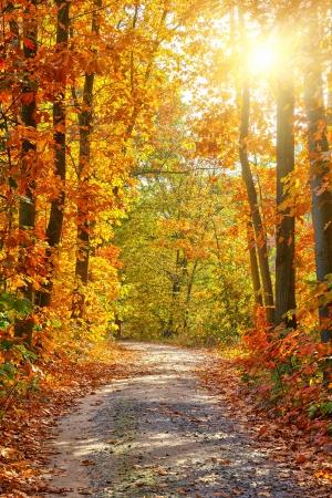 Camino en el bosque de oto?o Foto de archivo