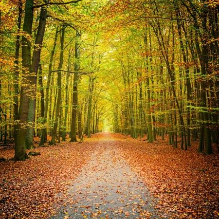 Pathway in den herbstlichen Wald