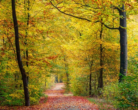 forest road: Pathway in the autumn forest