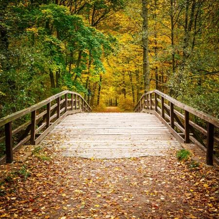 Houten brug in de herfst bos Stockfoto