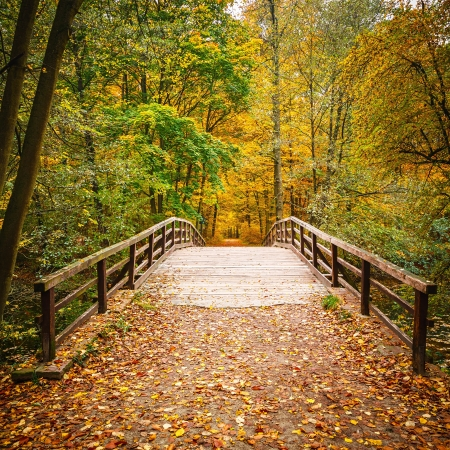 tree in autumn: Wooden bridge in the autumn forest Stock Photo