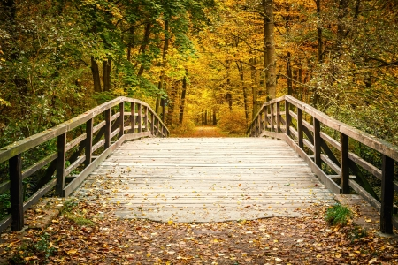 Pont de bois dans la for?t d'automne Banque d'images