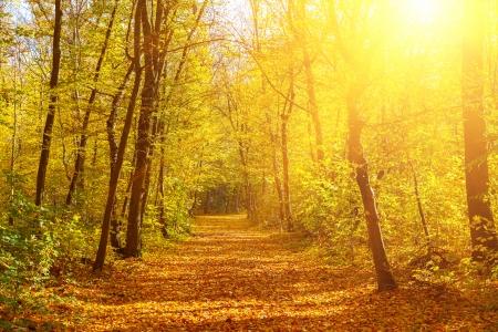 Allée dans le parc automne ensoleillé