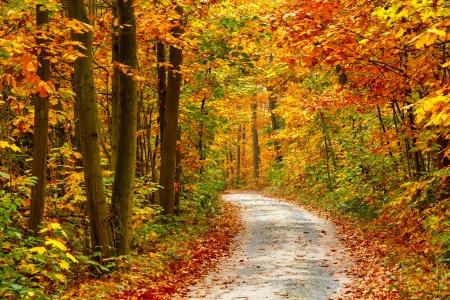 カラフルな秋の森での経路 写真素材