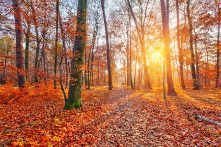 カラフルで霧深い秋の森