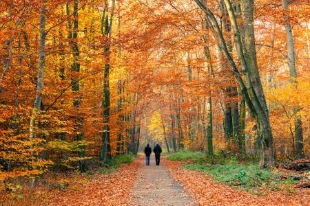 Allée dans le parc automne coloré