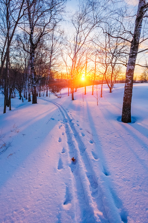 urban scenics: Colorful sunset in winter forest