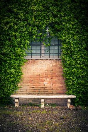 Stone bench and ivy on the old wall of a medieval house photo