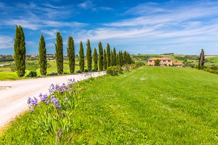 cypress tree: Beautiful landscape in Tuscany, Italy