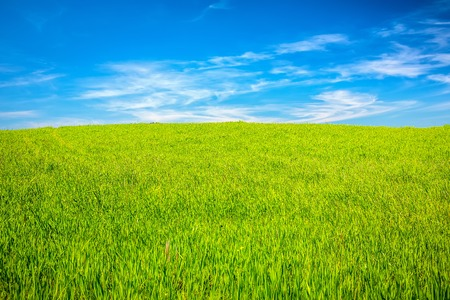 agriturismo: Green field under blue sky, Tuscany, Italy