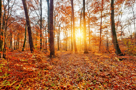 Sunlighted autumn forest