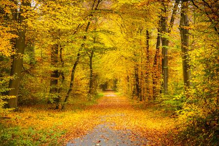 Herfst bos Stockfoto
