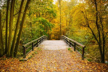 Brug in de herfst bos